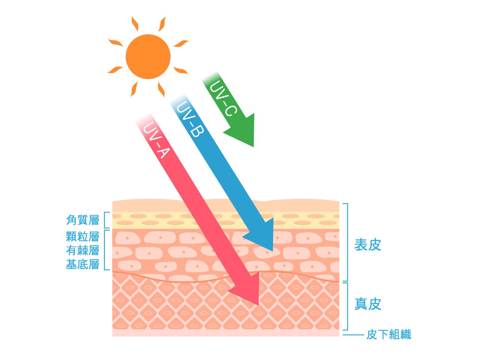 UV-A/UV-B/UV-C/紫外線の種類
