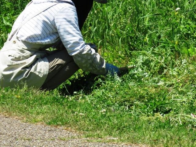 草刈りをする女性