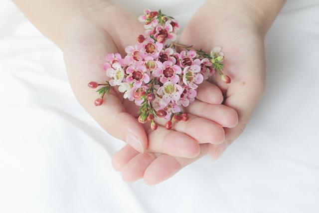 手の平の上のお花